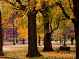 Tower Grove Park in Autumn by jojomercury, Photography->Landscape gallery