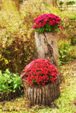 Calendar Garden Display by tigger3, photography->flowers gallery