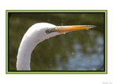 Animal Crackers XXXIII by Hottrockin, Photography->Birds gallery