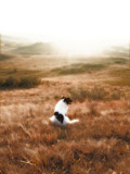 All Good Dogs Go To Heaven by Nikoneer, photography->manipulation gallery