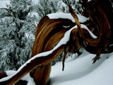 Wood Scupture of the winter by sunnymay, Photography->Nature gallery