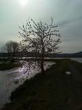 Wetland Tree by katsmeoww, Photography->Landscape gallery