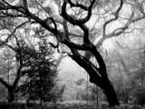 Whispering Oaks by CanoeGuru, Photography->Landscape gallery