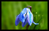 Fresh by frenger, Photography->Flowers gallery