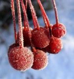 Frozen berries by Elini, photography->nature gallery