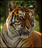 Black Pine Animal Sanctuary Visit 2014_Revised by tigger3, photography->animals gallery