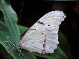 No Publicity, Please! by braces, Photography->Butterflies gallery