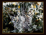 wonder web :-) by JQ, Photography->Nature gallery
