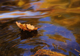 Leaf on Boulder Creek by espinosa6pack, photography->nature gallery