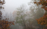 Foggy Nov. Morning, Part 2 by Chipola1972, Photography->Landscape gallery
