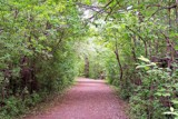 Pathway by kidder, Photography->Landscape gallery