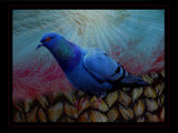 Mrs. Walter Pigeon by mesmerized, photography->manipulation gallery