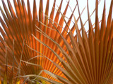 Orange Palm by MrOpus, Photography->Nature gallery