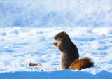 Squirrel Enjoying Some Goodies by tigger3, photography->animals gallery