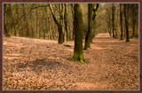 Wood In Disguise 1 (of 4) by corngrowth, Photography->Landscape gallery