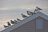 """10"" by Jimbobedsel, photography->birds gallery"