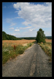 Country Lane 2 by mia04, Photography->Landscape gallery