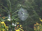 the web 2 by picardroe, photography->nature gallery
