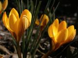 Spring (II) by Paul_Gerritsen, Photography->Flowers gallery