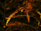 Dying Fern by xentrik, photography->nature gallery