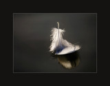 floating by JQ, photography->macro gallery