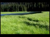 meadow in hood bay by jeenie11, Photography->Landscape gallery