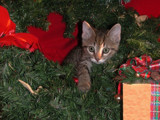 'Tis The Season.... by sailorman6309, photography->pets gallery