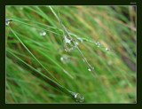 Liquid Diamond by dmk, Photography->Macro gallery
