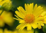 sunburst by solita17, Photography->Flowers gallery