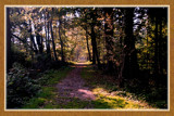 Forest End by corngrowth, Photography->Landscape gallery
