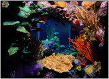 The Fish Tank by Mannie3, photography->underwater gallery