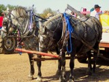 Two Horsepower Apple Hauler by kidder, Photography->Animals gallery