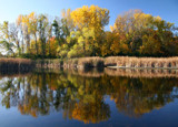 Woodland Reflections by Silvanus, photography->shorelines gallery