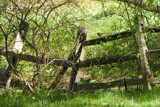 The Fence by photog024, Photography->Landscape gallery