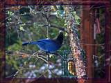 The Elusive Ones.... by ironjoe, Photography->Birds gallery