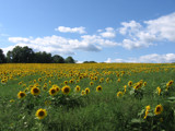 Cloudy with a touch of sun-flowers by baj7460, Photography->Landscape gallery