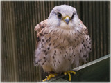 sweetie pie........... by fogz, Photography->Birds gallery