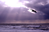 Moody Seagull by PamParson, Photography->Shorelines gallery