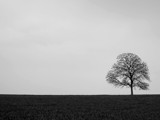 alone by enon, Photography->Landscape gallery