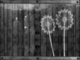Painting A Fence by bfrank, contests->b/w challenge gallery