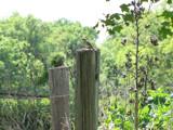 Mockingbird by girlmeetsworld0407, photography->birds gallery