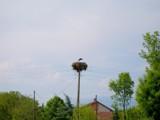 I Arrived by koca, photography->birds gallery