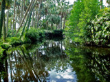 Bok Sanctuary - Garden Stream by CanoeGuru, Photography->Landscape gallery