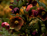 Flowery Manpulation by tigger3, photography->manipulation gallery