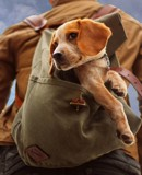 Back Pack by JaiJoli, photography->pets gallery