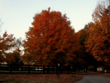 Late Autumn Color by makeshifter, photography->landscape gallery