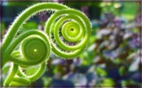 Image: Golden Green Spiral