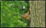 Peek-A-Boo by Jimbobedsel, Photography->Animals gallery
