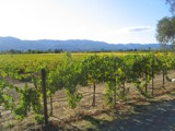 Fall Takes Over Napa by kat31185, contests->Fall Festivities gallery