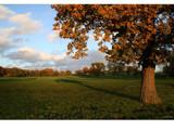 the mighty oak... by fogz, Photography->Landscape gallery